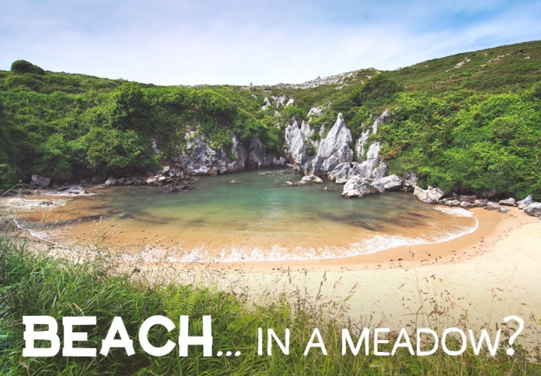 Beach... in a meadow??