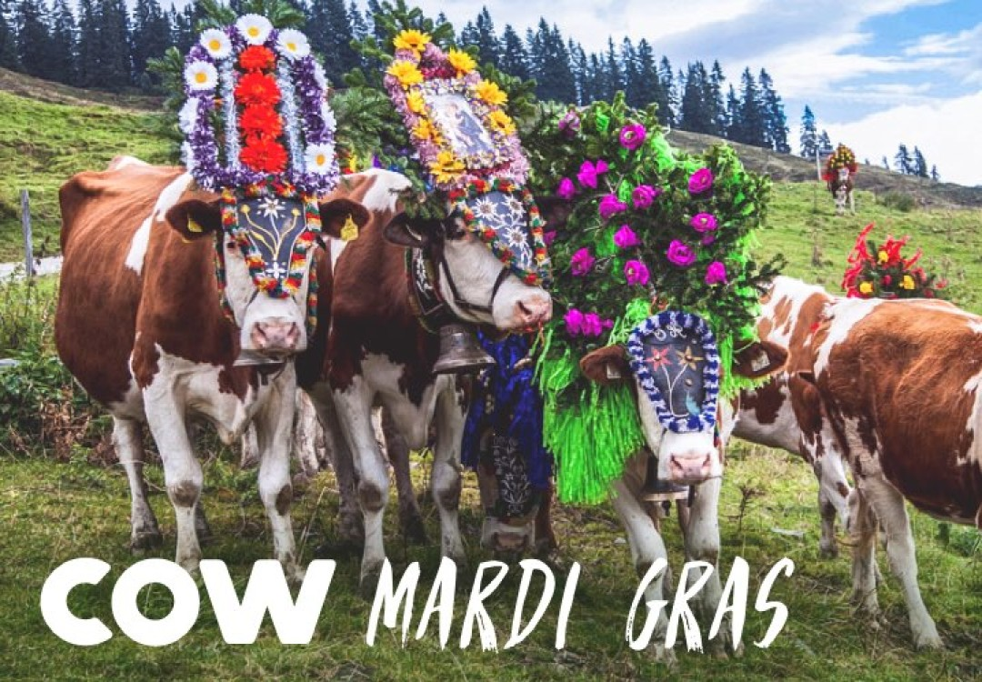 Cow Mardi Gras