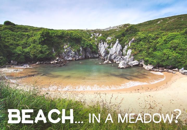 Beach... in a meadow??