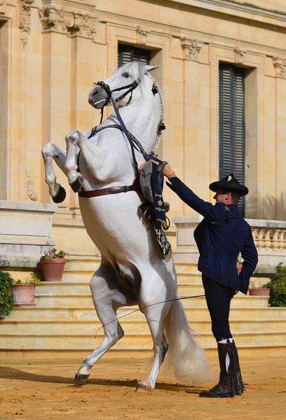 Andalusia's Dancing Horses